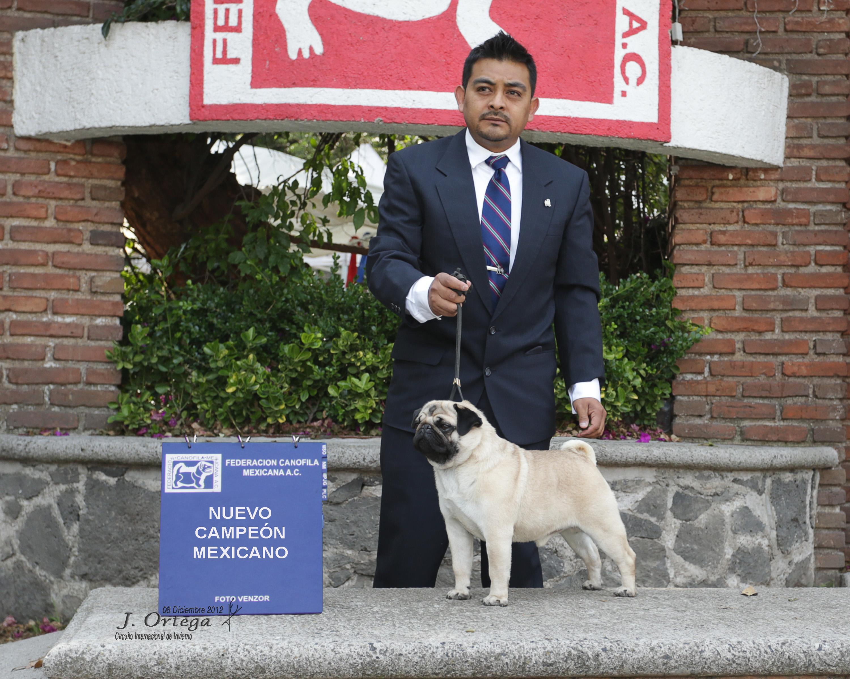 CH. DIDIEL ANDES EL CHILENAZO